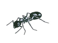 entreprise de d sinfection contre les fourmis de jardins. Black Bedroom Furniture Sets. Home Design Ideas