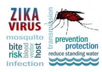 Photos coplaclean du virus zika
