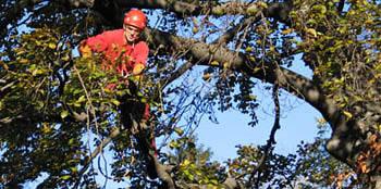 Les interventions sur les grands arbres