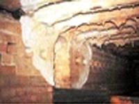 Champignon des maisons  Serpula lacrymans