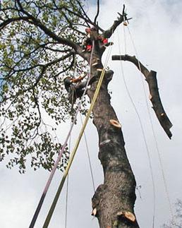 Abattage, démontage d'arbres difficiles