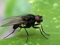 entreprise de traitement contre les mouches