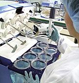 Services de lutte antiparasitaire professionnels